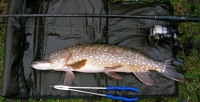 6lb-pike-the-elms-pike-match